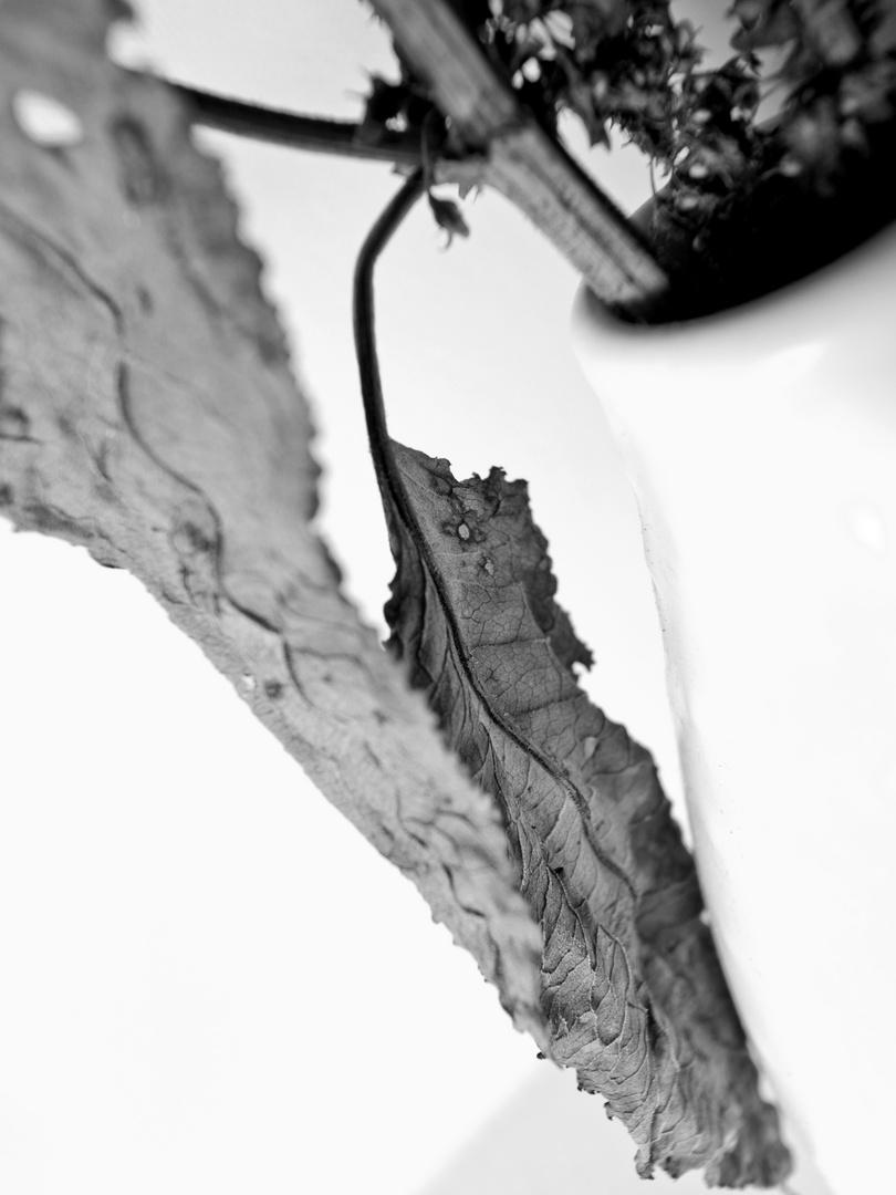 "whiteStrike (aus ""dead plants"")"