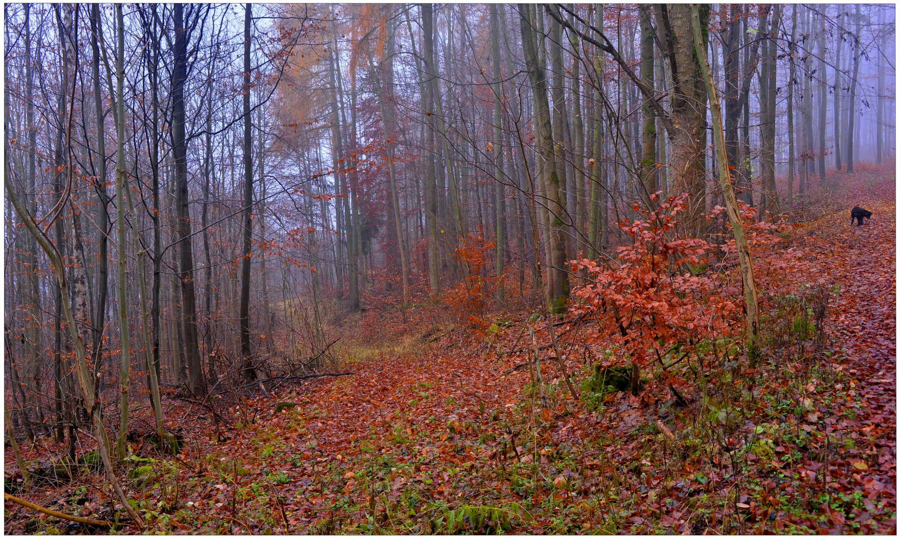 Wicky-Emily está de viaje de exploración en el bosque otoñal (Wicky auf Entdeckungstour im Wald)