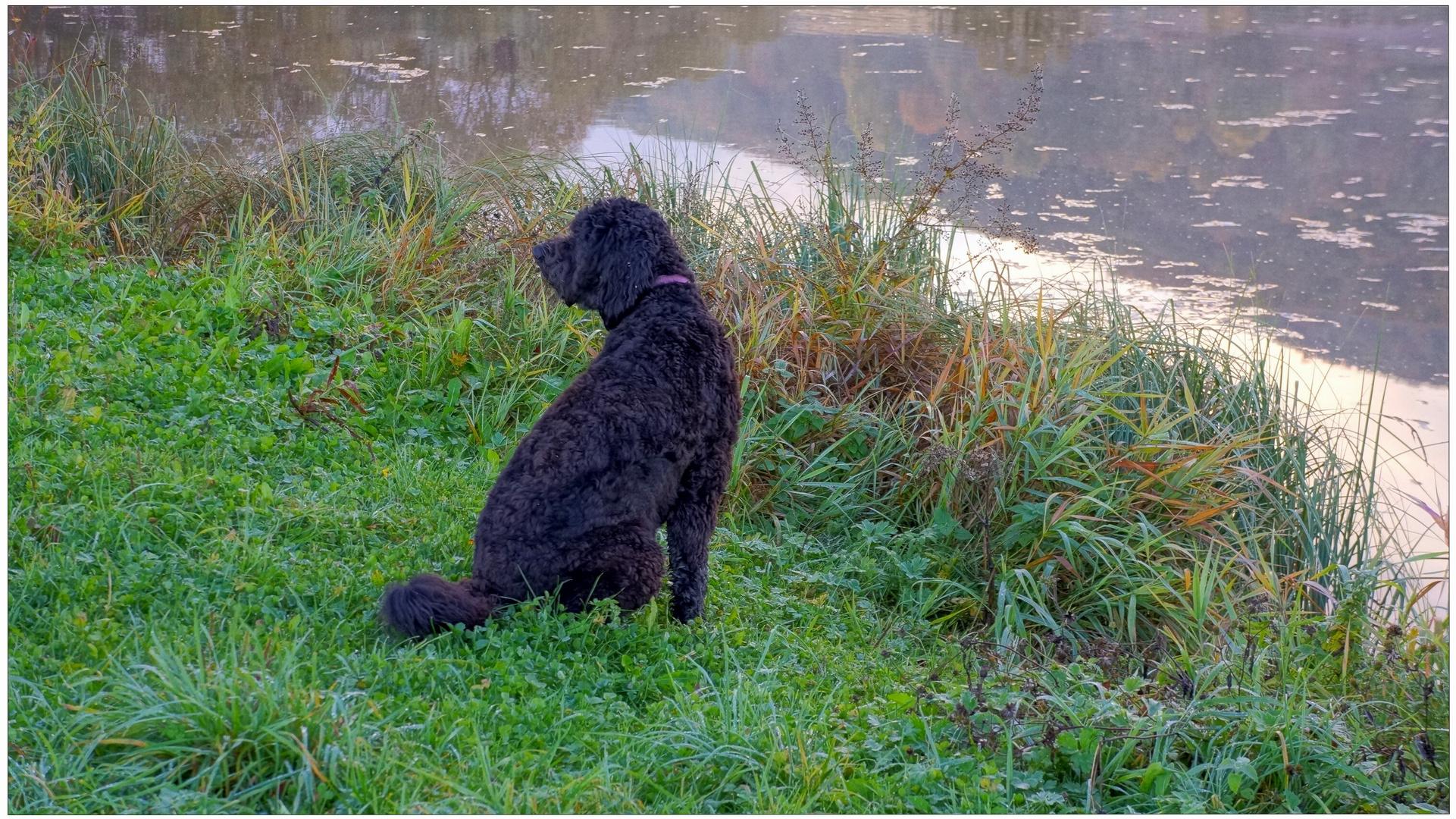 Wicky-Emily esta mañana en el lago (Wicky-Emily heute Morgen am See)