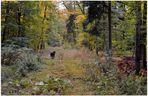 Wicky-Emily im Herbstwald (Wicky-Emily en el bosque otoñal)
