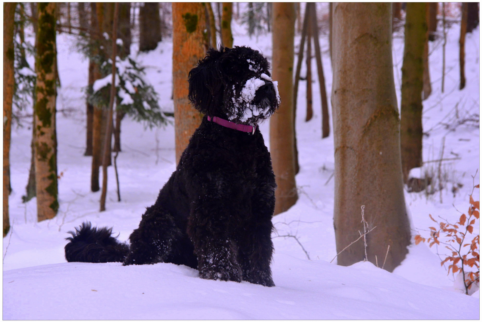 Wicky-Emily im Winterwald (Wicky-Emily en el bosque invernal)