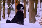 Wicky-Emily im Winterwald (Wicky-Emily en el bosque invernal)