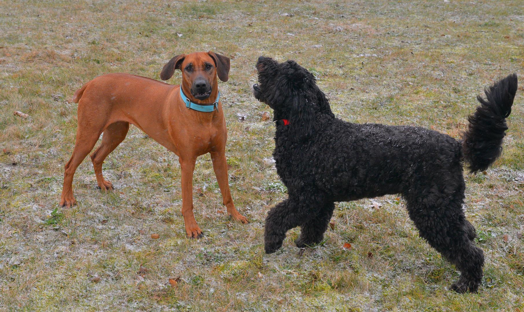 Wicky-Emily mit ihrer Freundin Nala (Wicky-Emily con su amiga Nala)