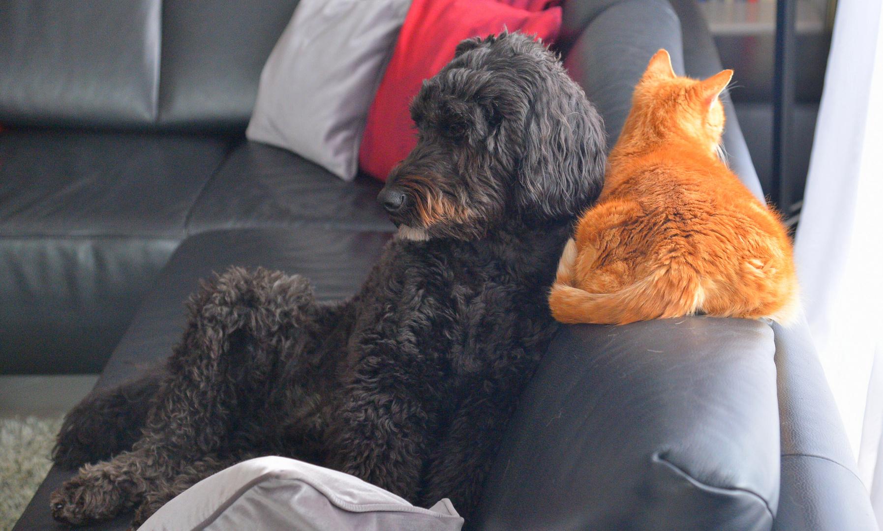 Wicky-Emily und Fuchsie