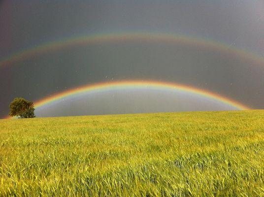 Widdehuh Regenbögen