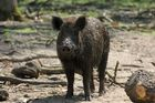 """Wie bei """"Schweins"""""""