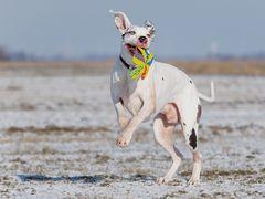Wie bringt man einem Hund das Schielen bei?