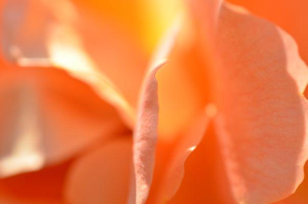 Wie der Duft so auch die Farben - einfach wundervoll