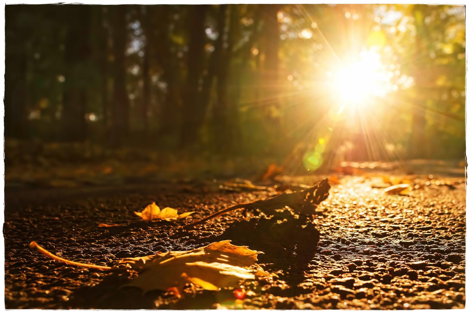 Wie der Herbst