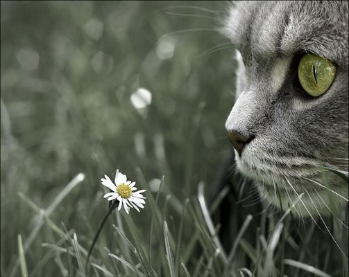 Wie die Blume wohl riecht?