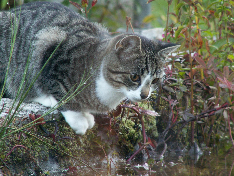 Wie dumm dass Fische im Wasser sind und Katzen meist wasserscheu