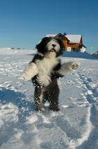 Wie ein Bär im Schnee