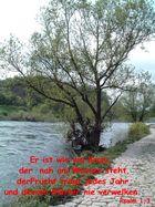 Wie ein Baum