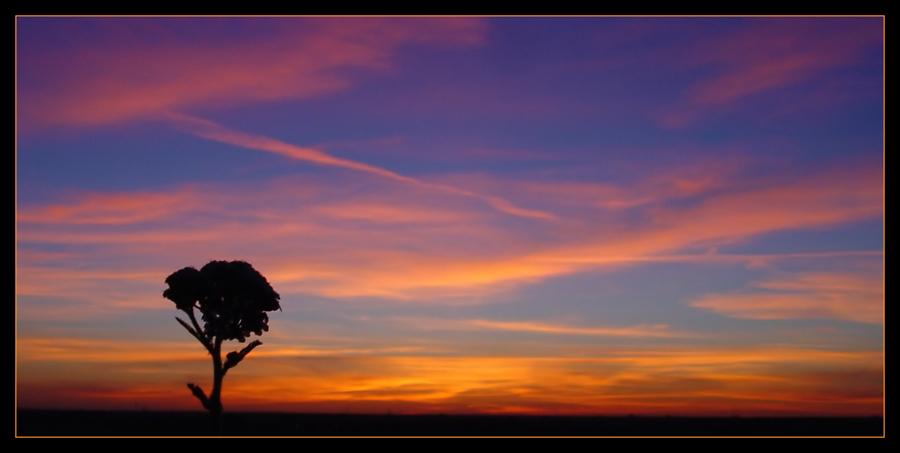 Wie ein Baum in der Savanne