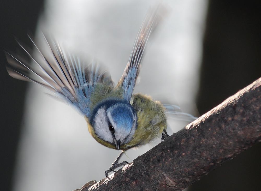 wie ein kleiner Kolibri