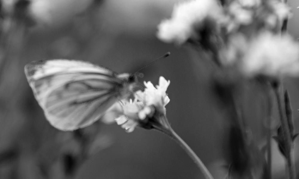 wie ein Schmetterling......
