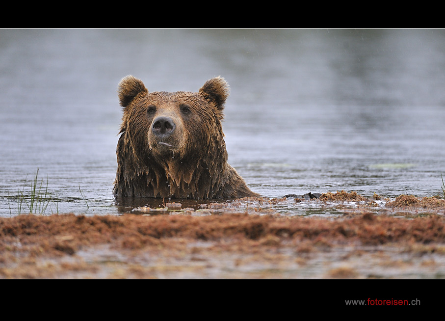 Wie ein Teddy-Bär