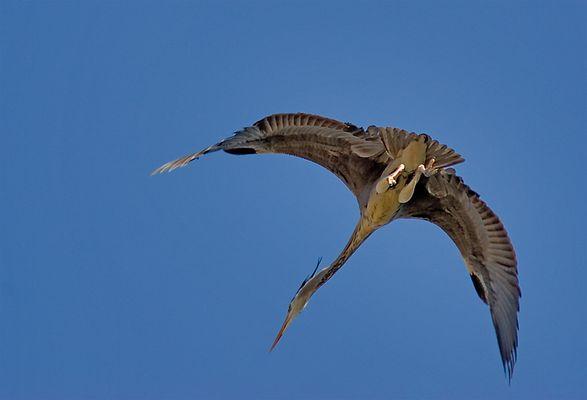 Wie ein Urzeitvogel...