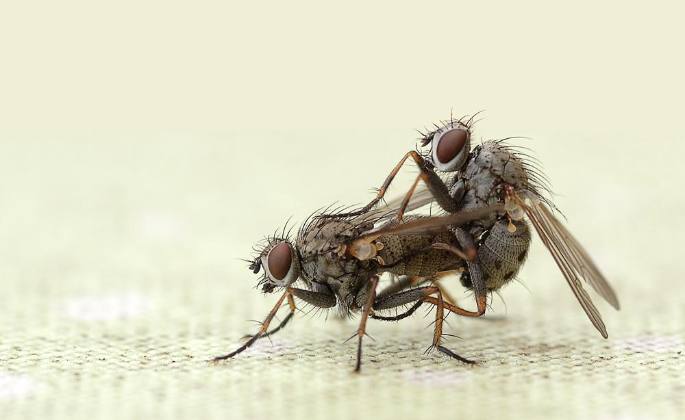wie fliegen fliegen machen foto bild tiere wildlife insekten bilder auf fotocommunity. Black Bedroom Furniture Sets. Home Design Ideas