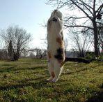 Wie groß ist die Katze?
