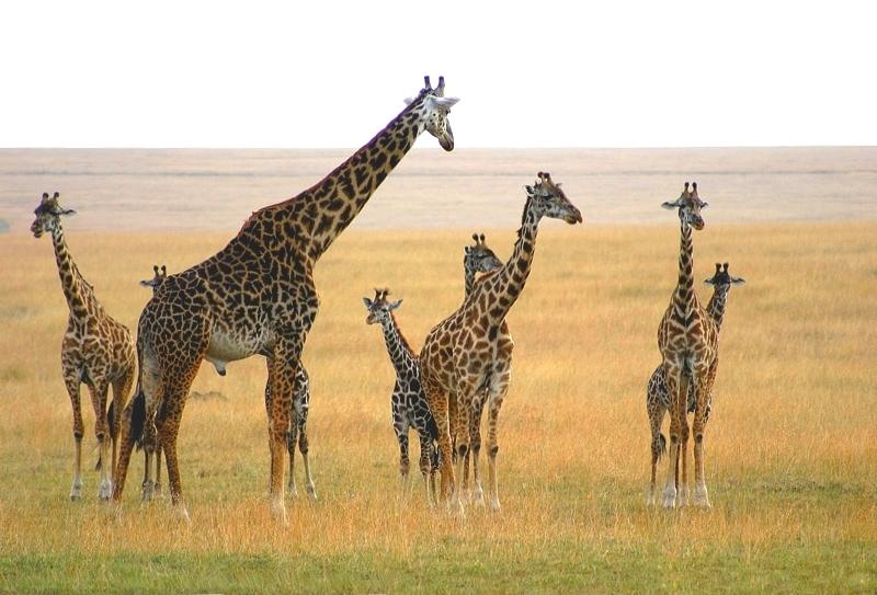 Herde  Wie groß ist seine Herde? Foto & Bild | quatsch, fun und ...