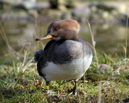Wie heisst der kleine Vogel?