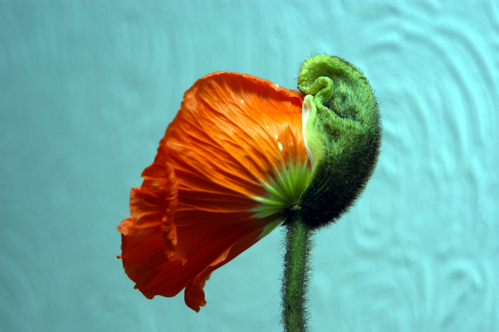 Wie heißt diese Blume ?