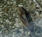 Wie heisst dieser Vogel???