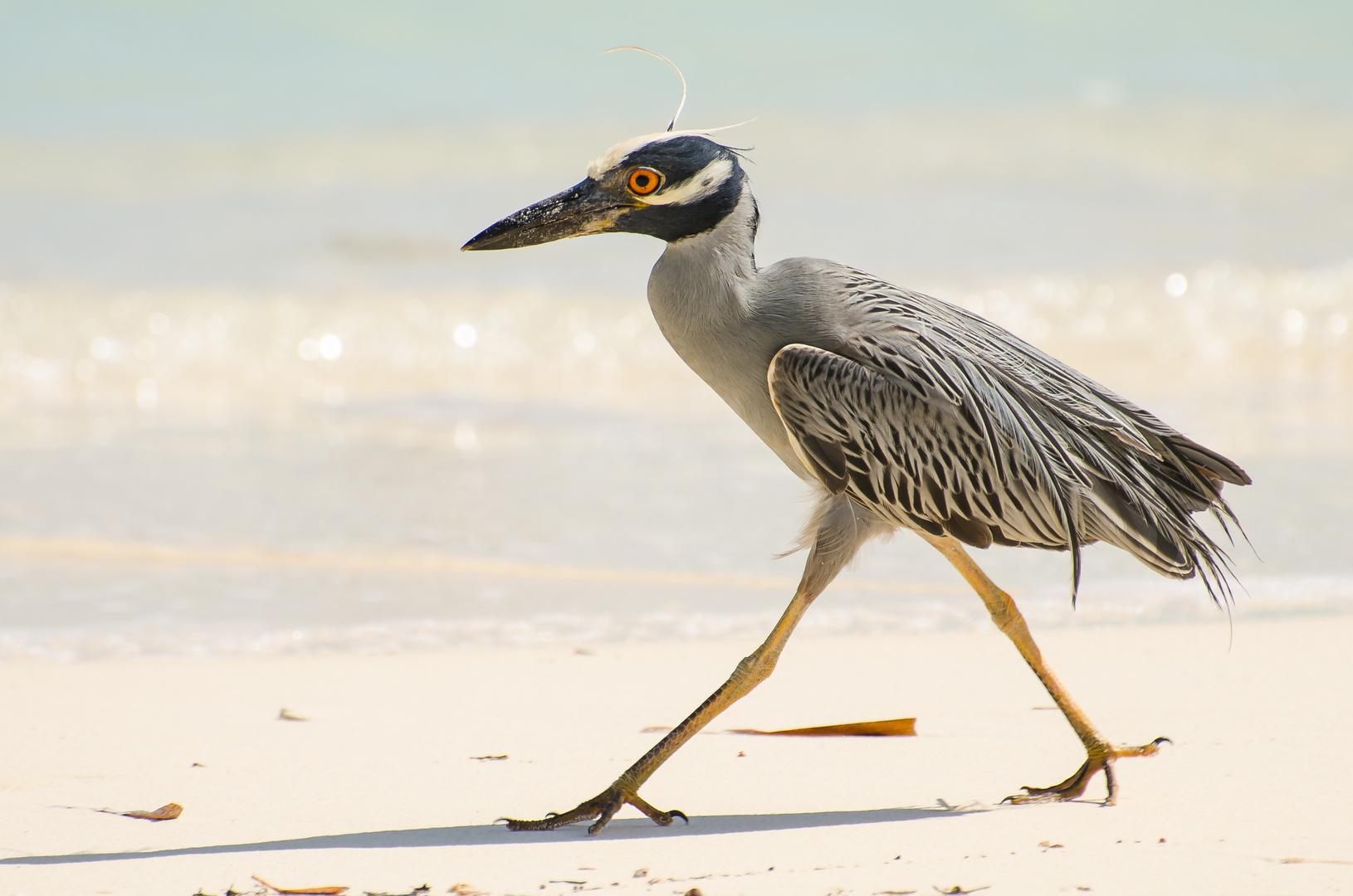 Wie Heißt Er wie heißt dieser vogel er kommt auf kuba vor foto bild tiere
