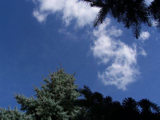 Wie hoch können Bäume wachsen?