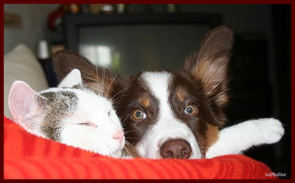 ... wie Hund und Katz ???