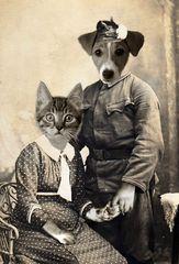 Wie Hund und Katz'