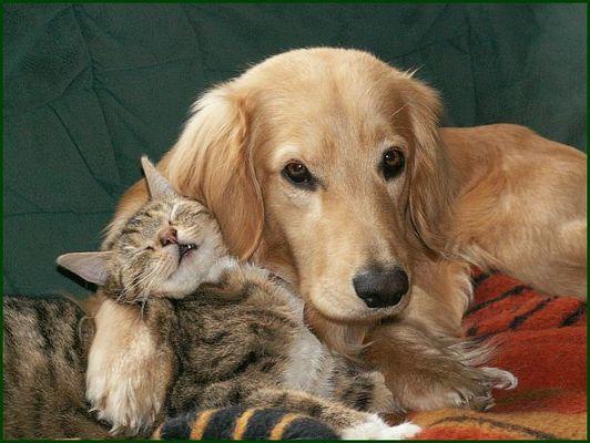 Wie Hund und Katz ?!