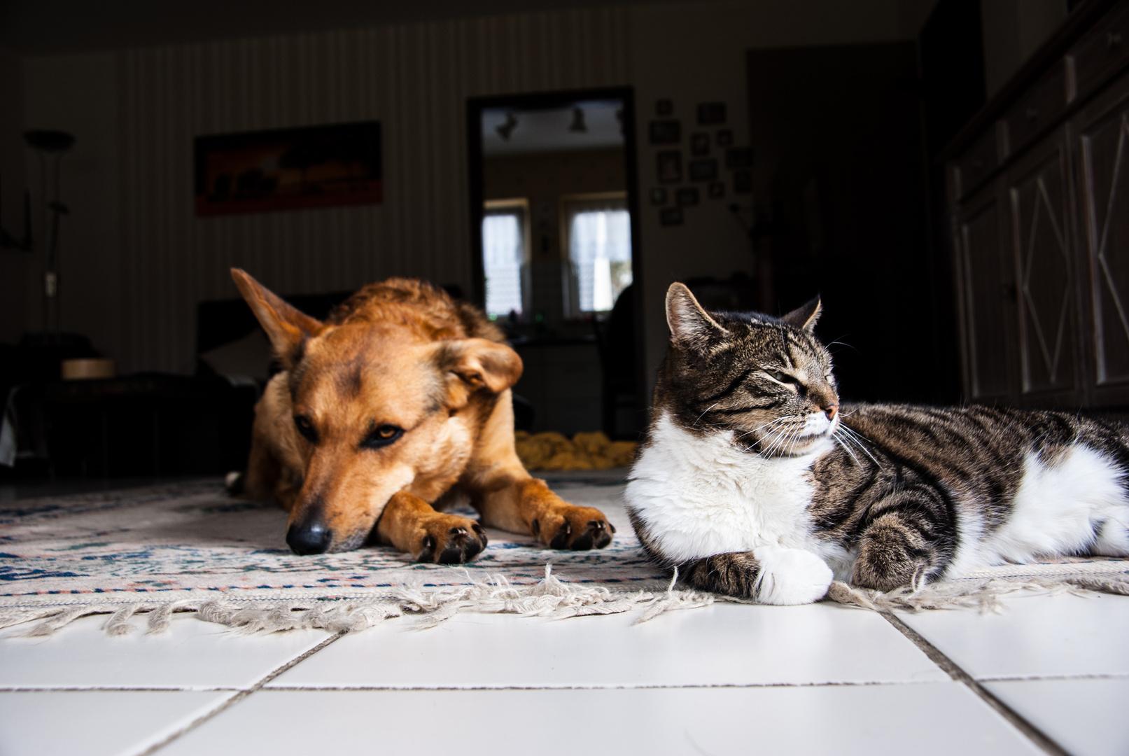 Wie Hund und Katz?