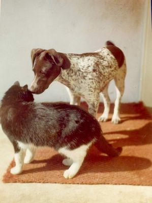 Wie Hund und Katze?