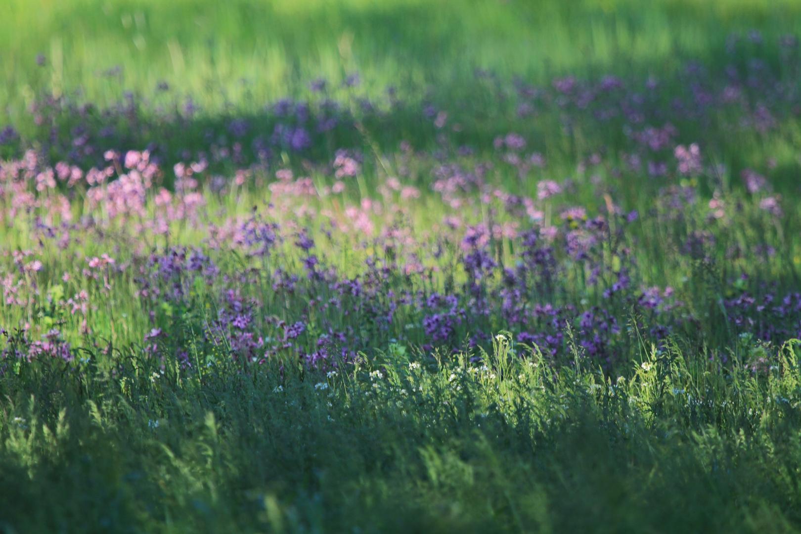 Wie im Garten Monet's