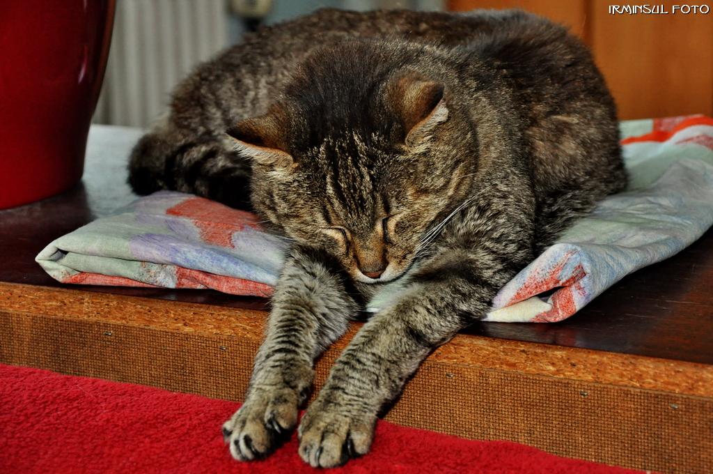 Wie kann man nur so lange schlafen