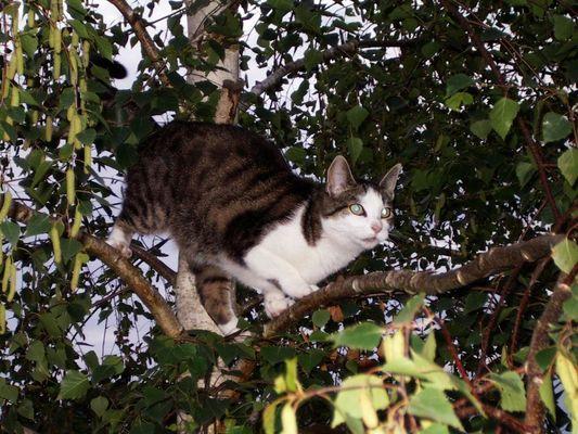 Wie komme ich vom Baum wieder runter?