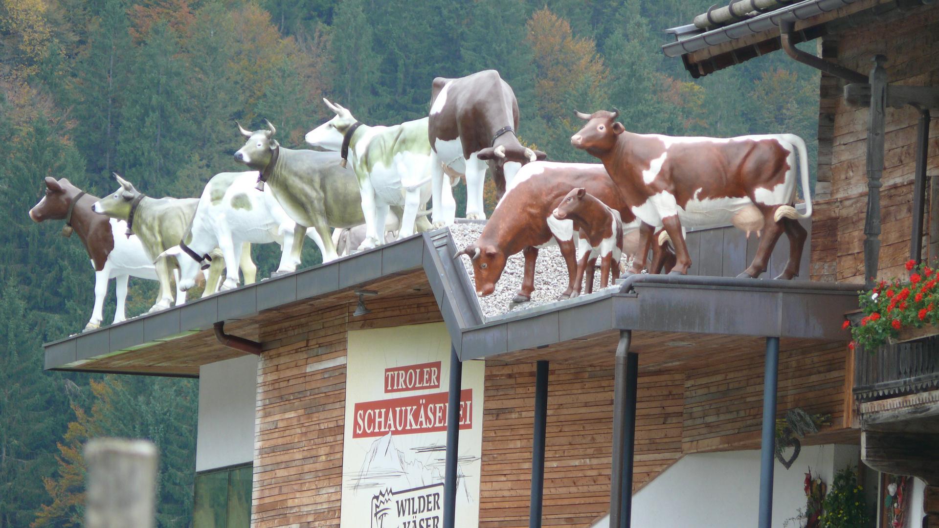 wie kommen denn diese kühe aufs dach?