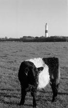 Wie kommt die Kuh zum Turm?