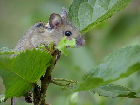 """""""Wie kommt die Maus in den Baum?"""""""