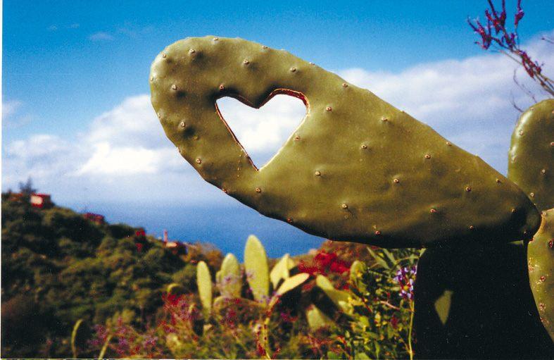wie k sse ich einen kaktus foto bild pflanzen pilze flechten kakteen sukkulenten. Black Bedroom Furniture Sets. Home Design Ideas