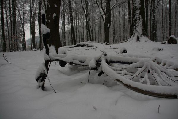 Wie lange liegt das Rad im Wald?