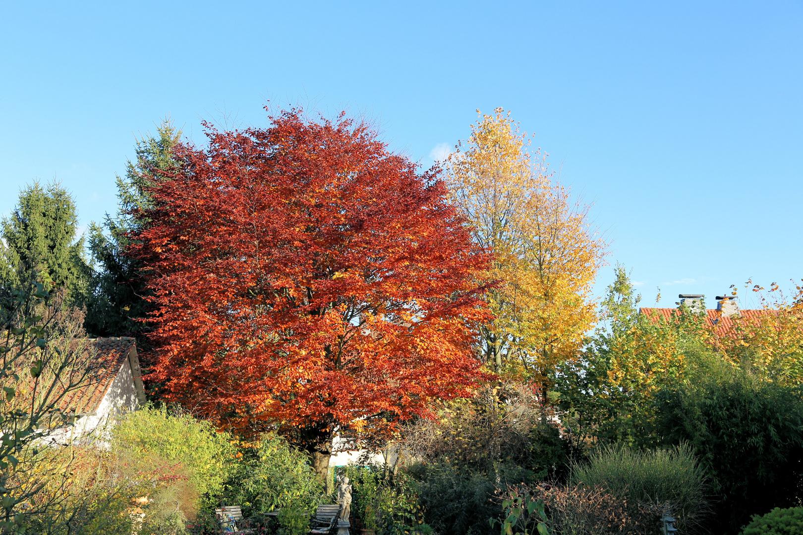 Wie man sieht macht der Herbst auch vor unserem Garten keinen Halt!