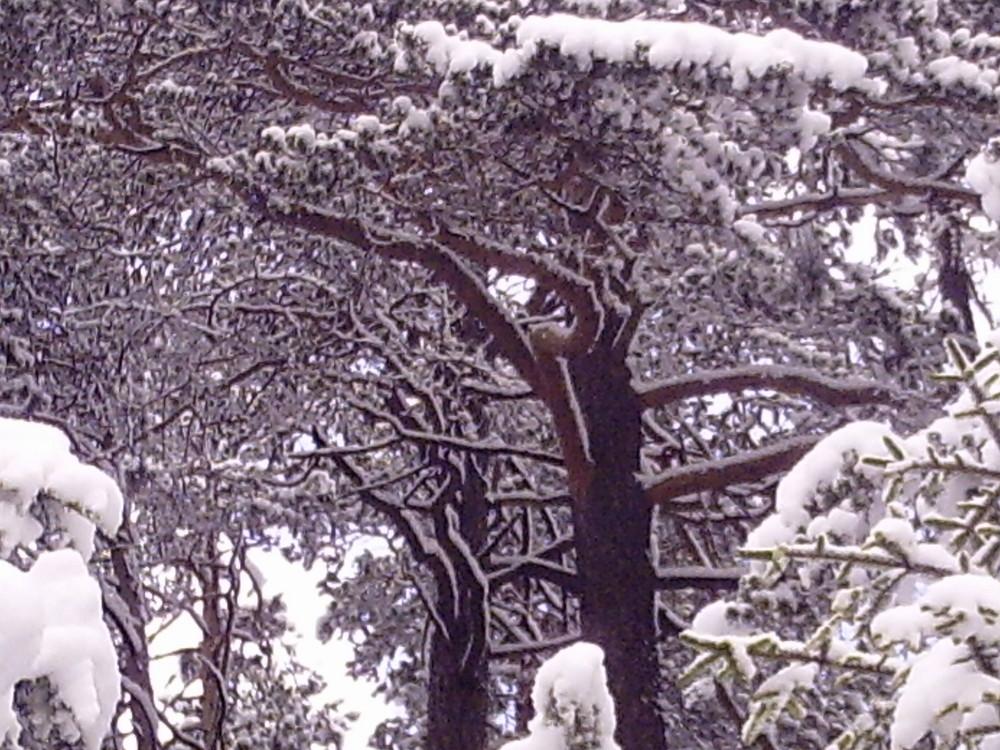 Wie schön kahle Bäume im Schnee sein können....