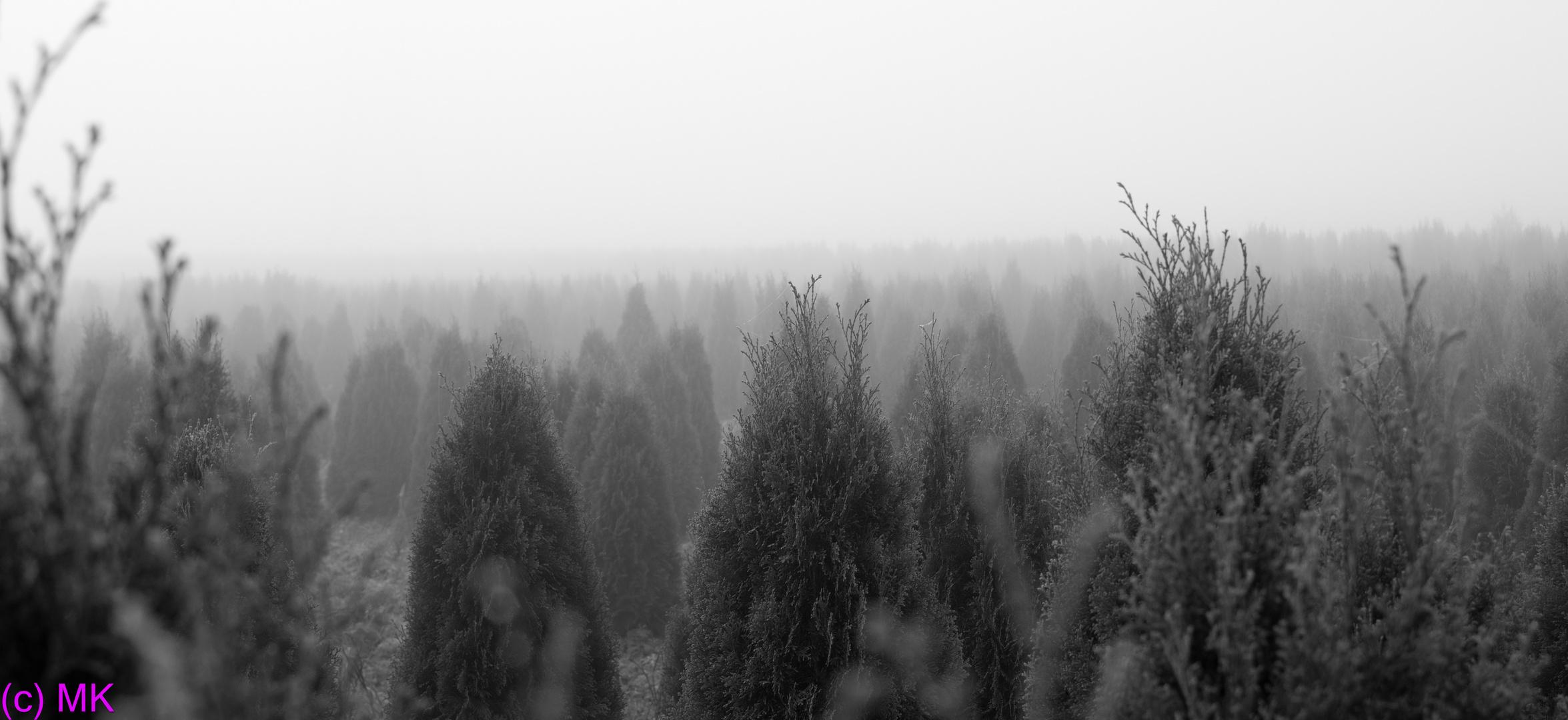 Wie trostlos... Nebel