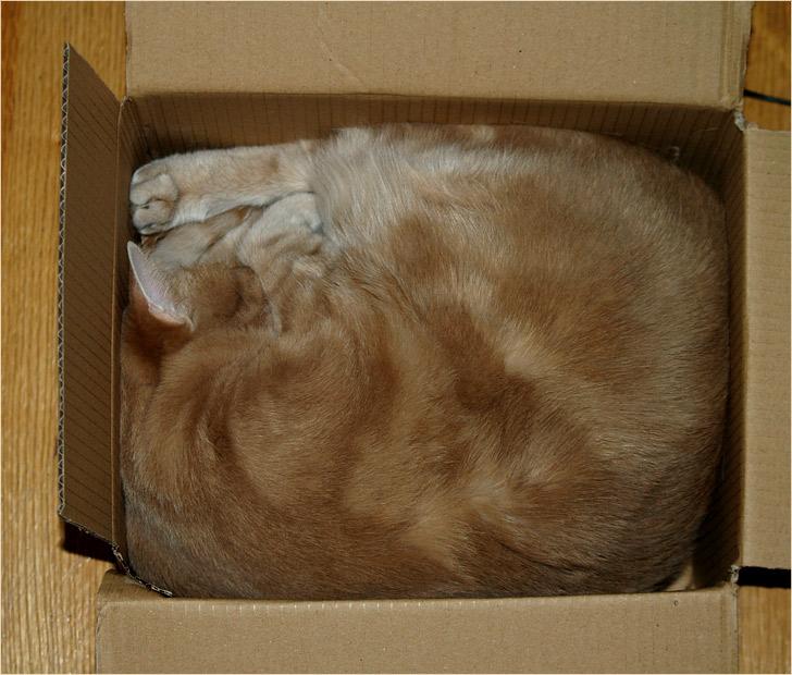 wie verpackt man eine katze foto bild quatsch. Black Bedroom Furniture Sets. Home Design Ideas