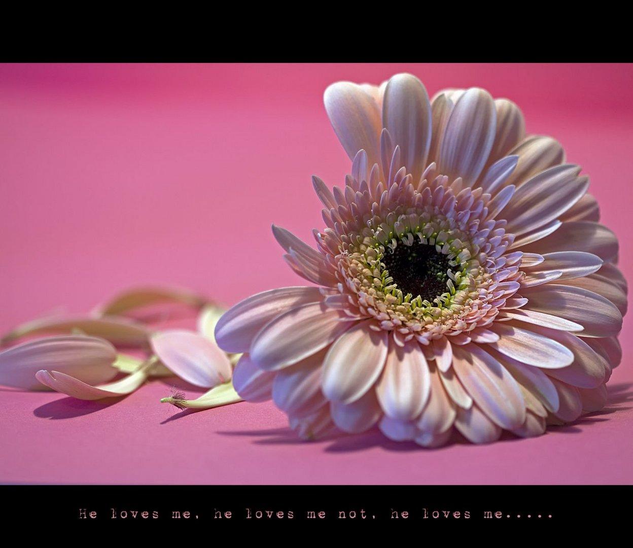 Wie viele Blumen muß ich noch fragen bis ich die Antwort bekomme die ich hören will?
