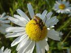 wie war das mit den Bienen und den Blüten ?