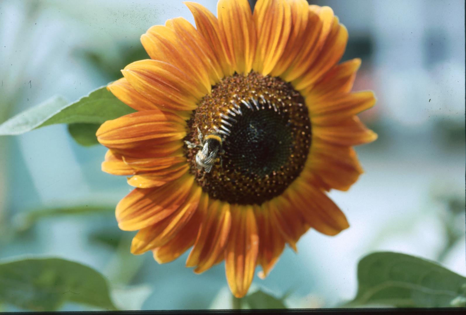 Wie war das noch mit den Bienen und den Blumen?